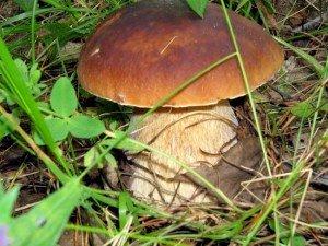 Белый гриб (боровик) Витамин В3: 2,7(мг) /100гр